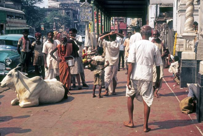 Holy Man and the Sacred Cow: Calcutta, India - November 3, 1968