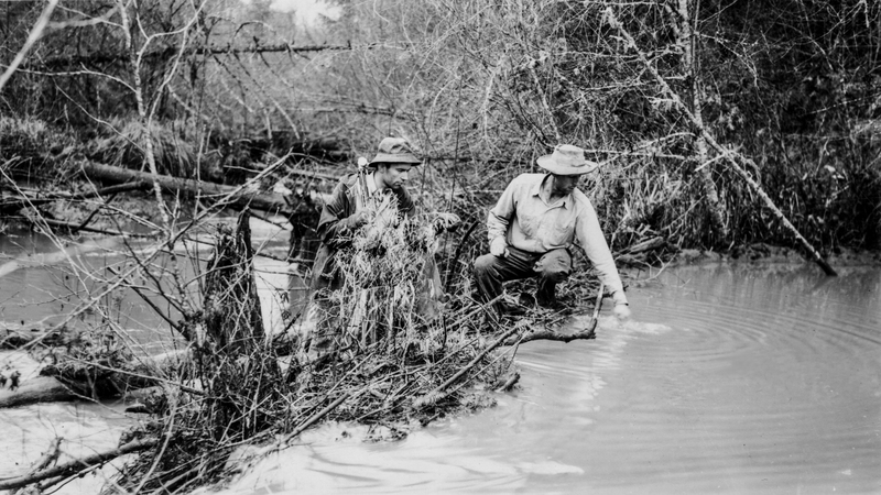 Probably just looking for gators. Date is approximate; true date unknown.